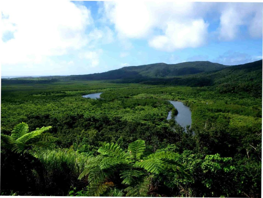 1Mangrove forest Nakama River Iriomote Is.