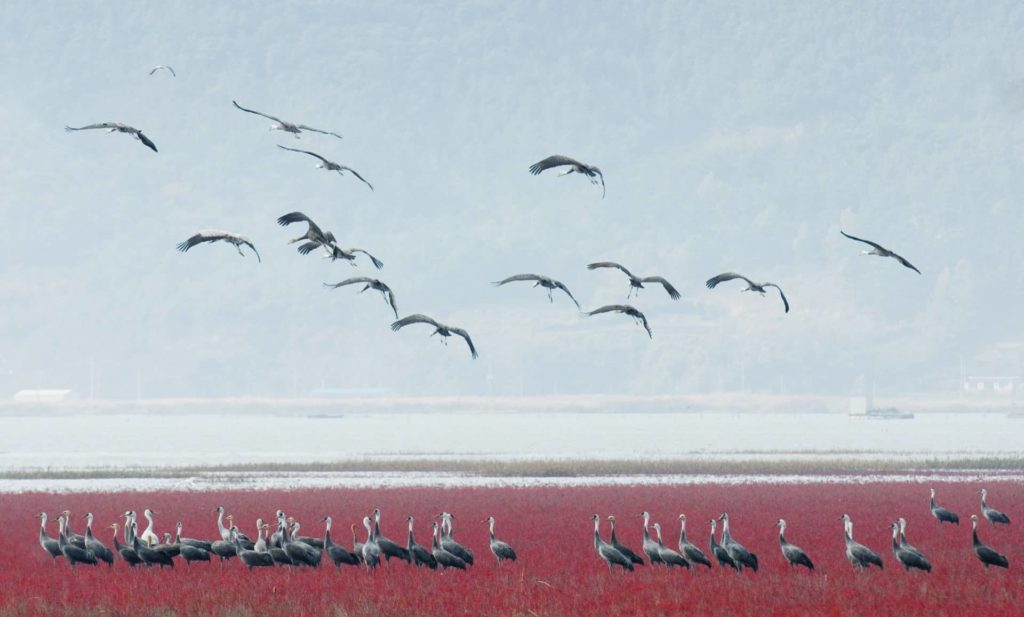 2.1Community of East Asian seepweed and Hooded cranes